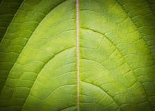 Leaf background low key Stock Photo