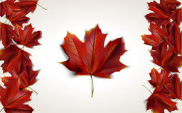 Leaf background. Maple leaves placed in form of Canadian flag, vector illustration Stock Photos
