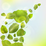 Leaf background. Nature background with fresh green leaves and sunshine Royalty Free Stock Images