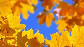 Leaf Background. Seamless Loop stock video