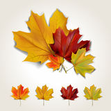 Leaf background. Set of colorful autumn leaves with shadow. Vector illustration Royalty Free Stock Image