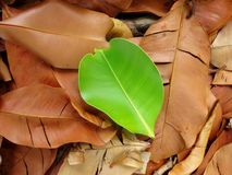 Leaf Background Royalty Free Stock Image