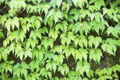 Leaf background - stock image Royalty Free Stock Images