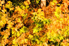 Leaf Background Texture Pattern Stock Image