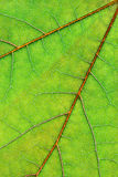 Leaf background vertical Royalty Free Stock Images