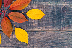 Leaf background on a wooden table Stock Photography