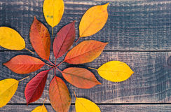 Leaf background on a wooden table Stock Images