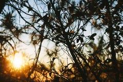 Leaf Backlit Silhouette. Stock Images
