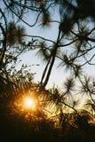 Leaf Backlit Silhouette. Stock Image