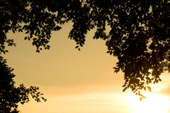 Leaf Backlit Silhouette and sunlight evening time Royalty Free Stock Images