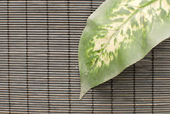 Leaf On Bamboo Stock Images