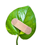 Leaf bandage Stock Images