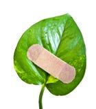 Leaf bandage Stock Images