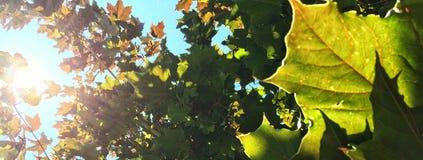Leaf banner Royalty Free Stock Images