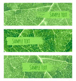 Leaf banner Stock Photos