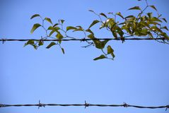 Leaf barbed wire border Royalty Free Stock Photo