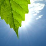 Leaf bathes in sunlight. A leaf bathes in sunlight. In the background blue sky, and clouds stock photo