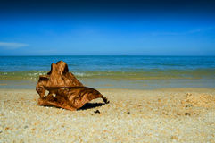 Leaf on the beach. A dried leaf on a beach Stock Photo