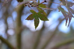 Leaf. Beautiful leaf in garden. Nature royalty free stock images