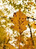 Fall is here. Leaf beautiful season color wonderful sweet happy day love live life royalty free stock photo