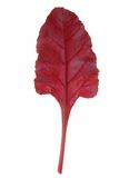 Leaf Beet Stock Photo