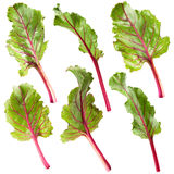 Leaf beet Stock Photography