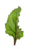 Leaf of beetroot on white Stock Images
