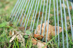 Leaf behind rake Stock Photography