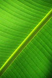 Leaf from below Royalty Free Stock Photography