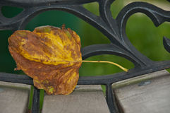Leaf on bench. Stock Photo