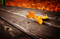 Leaf on a bench Royalty Free Stock Photo