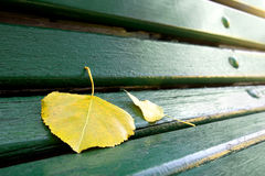 Leaf on Bench. Detail of a green bench in a park with fallen leafs Royalty Free Stock Photography