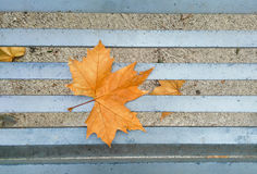 Leaf on bench Royalty Free Stock Photo