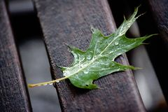 Leaf on a bench Stock Image