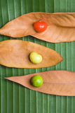 Leaf and Berry Still Life. Nature still life with red yeloow and green berries on leaves Stock Photo