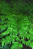 Leaf of a big fern Stock Images