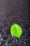Leaf and black background Royalty Free Stock Images