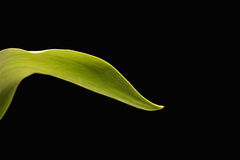Leaf on black Royalty Free Stock Photography