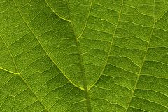 Leaf in the blow-up Royalty Free Stock Photography