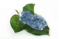 Leaf in blue ice Royalty Free Stock Photo