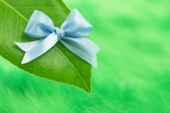 Leaf with blue ribon Royalty Free Stock Photos