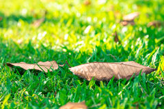 Leaf blur background in park of Thailand Royalty Free Stock Images