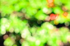 Leaf blur Stock Image
