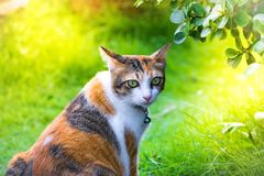 Leaf blurry foreground with cute cat asia are playing in the house on lawn on tree blurry background. using wallpaper or backgroun royalty free stock photography