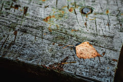 Leaf on board. Autumn leaf on a board in the garden Stock Photo