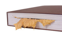 Leaf bookmark. Concept isolated on white Royalty Free Stock Images