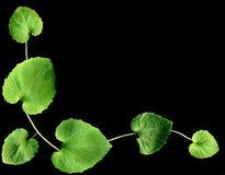 Leaf border Stock Photography