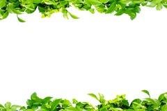 Leaf border Royalty Free Stock Photos