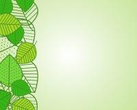 Leaf border Stock Image
