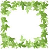 Leaf Border Stock Photo